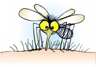 Consejos para picaduras de mosquitos